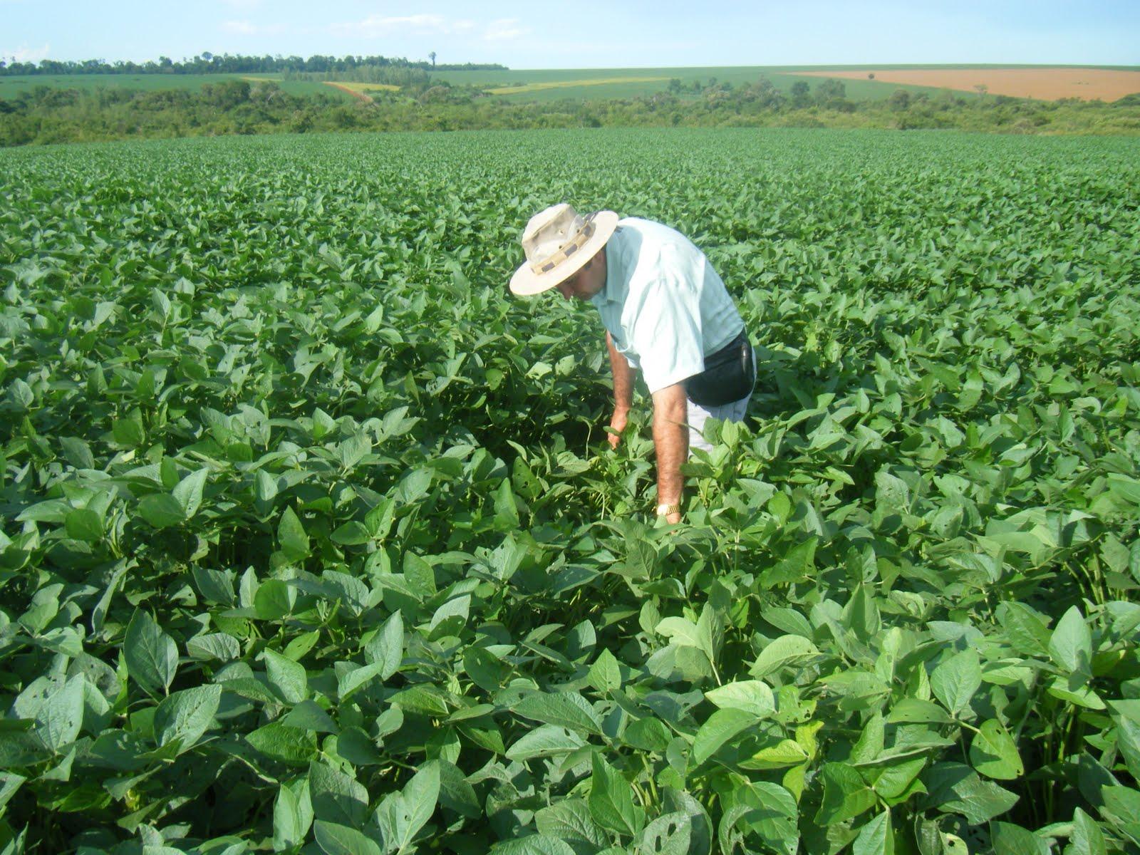 """Agro recibe """"rudeza innecesaria"""" en presupuesto, señalan productores"""