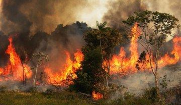 Pacto por Amazonia permitirá proteger esa región