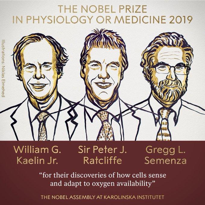 El estudio del uso del oxígeno de las células recibió el Nobel de Medicina 2019